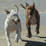2bullgood